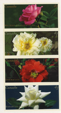 Rose Stamps from Canada