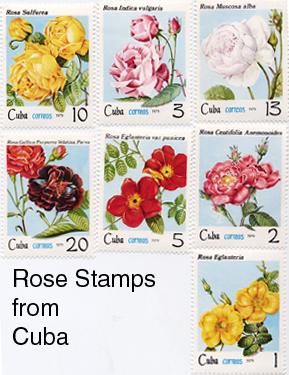 Rose Stamps from Cuba